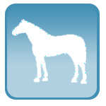 Портативный ветеринарный УЗИ сканер для лошадей, для жеребости кобыл