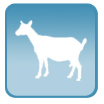 УЗИ для сукозности коз