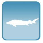 Портативный ветеринарный УЗИ сканер для осетровых рыб, рыбоводства, УЗИ для осетров