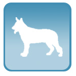 УЗИ для ветеринарных клиник, мелких домашних животных