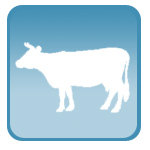 УЗИ для стельности коров КРС